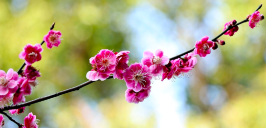 もうすぐ節分と立春、今月の健康対策は?