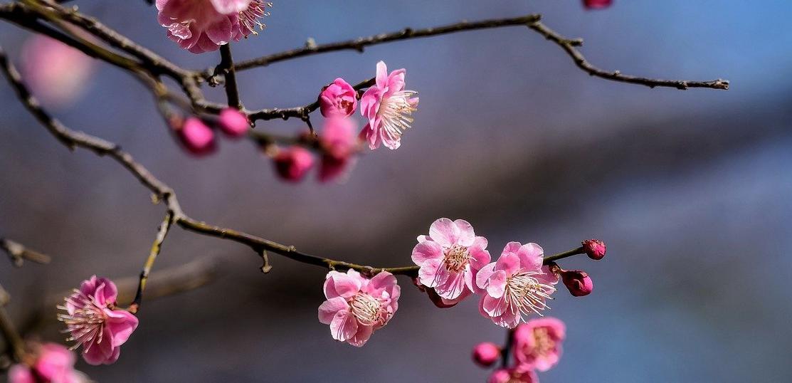 春は体の切り替え期!なぜ今デトックスが必要か?